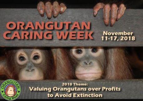 orangutan caring week joint 2018