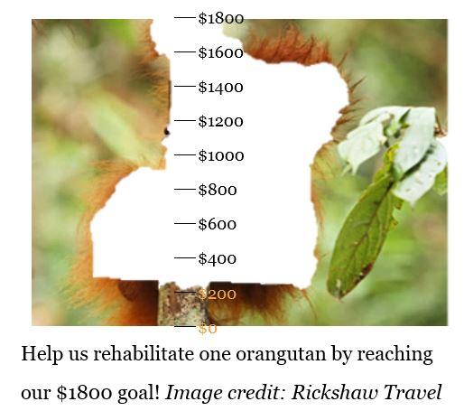 orangutan donation meter- $200
