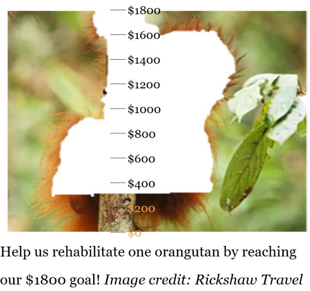 orangutan donation meter- $300